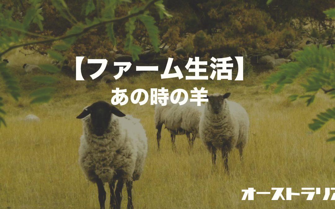 【ファーム生活】あの時の羊